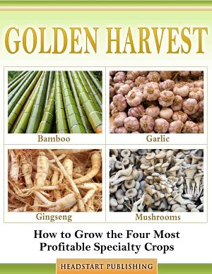 Growing ginseng for profit - The most profitable orchards ...